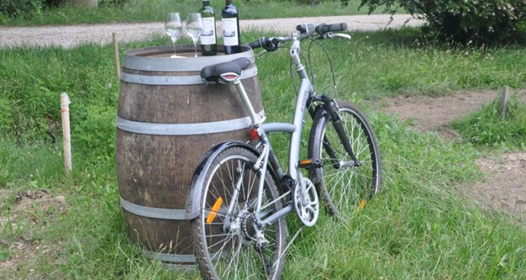 Bike tour in Bordeaux's wineyards, tasting of Bordeaux's wines