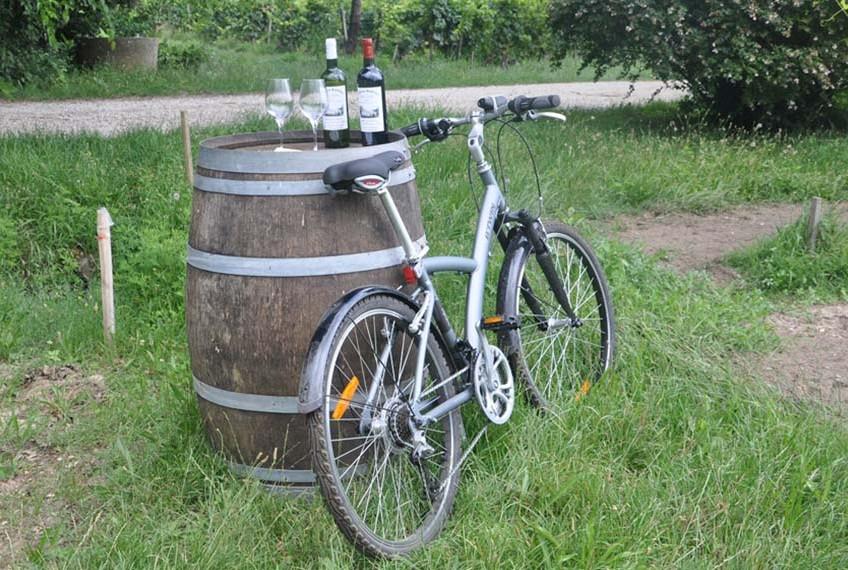 photo d'un vélo dans les vignes