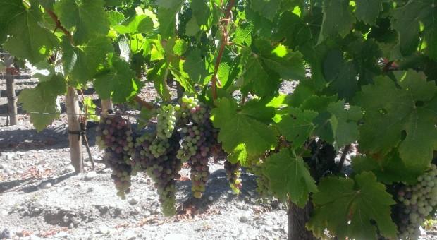Le vignoble de Bordeaux à vélo