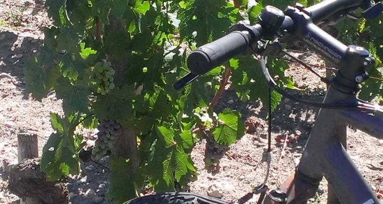 Bordeaux. visite de châteaux à vélo