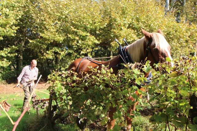 image d'un laboureur à cheval