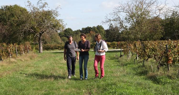 visite, dégustation et sport en Pessac-Léognan