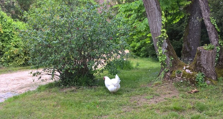Animals at chateau bardins- bordeaux