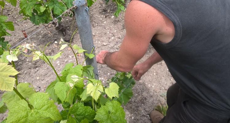 Bordeaux : visite au vignoble
