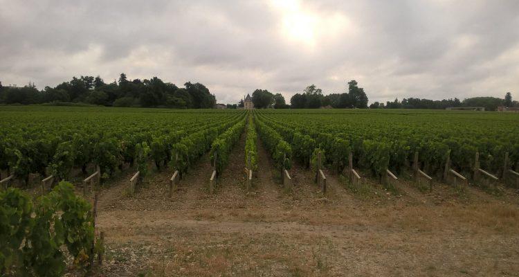 photo d'un vignoble de bordeaux en aoc pessac-léognan