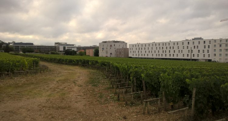 photo d'un vignoble de vins de bordeaux en ville
