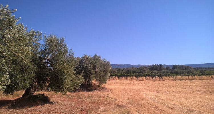 photo de vignobles et d'oliviers en sierra de guara