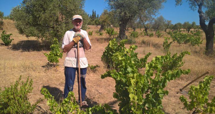 photo d'un viticulteur du somontano en train de travailler dans les vignes