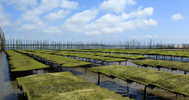 photo de parcs à huîtres
