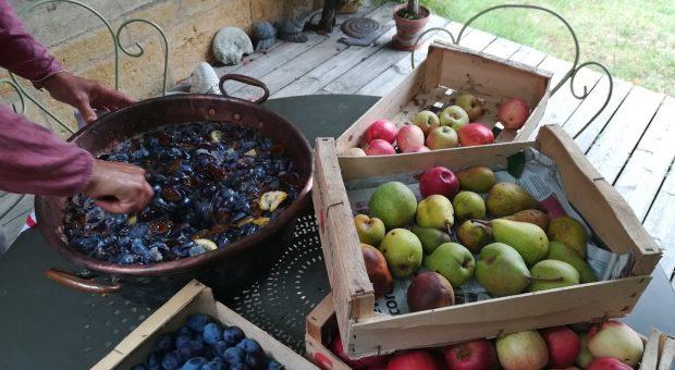 image de fruits