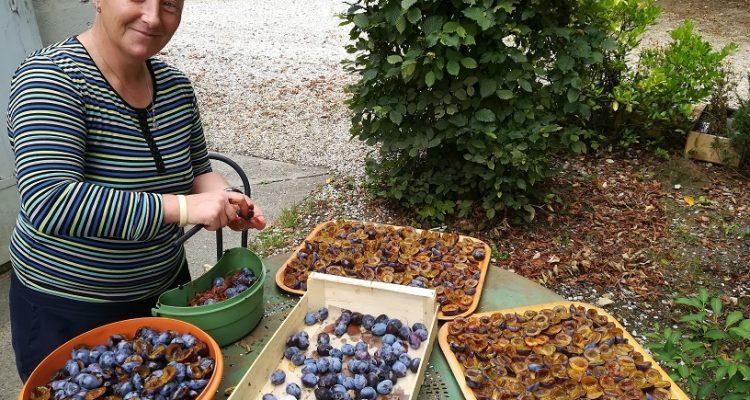 visite chateau bordeaux, dégustation de vins et fruits de saison