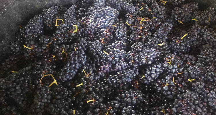 image de raisins