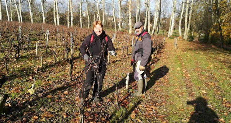 image de tailleurs dans les vignes