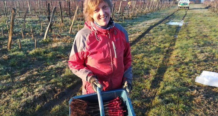 Stella Puel en complantation dans ses vignes