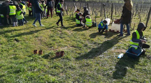 enfants dans les vignes