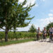 groupe à vélo dans les vignes