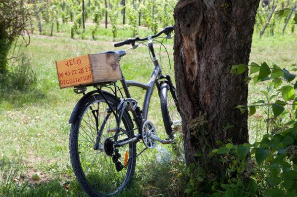 image de vélo dans les vignes